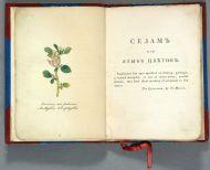 Селам, или Язык цветов